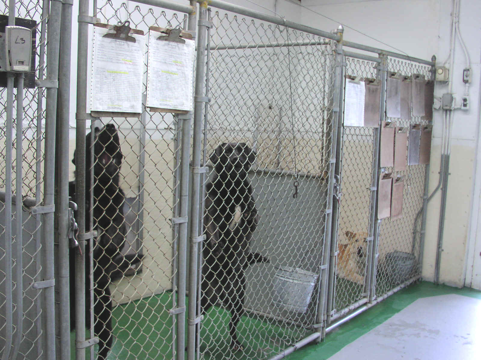 Image gallery kennel for What is dog boarding